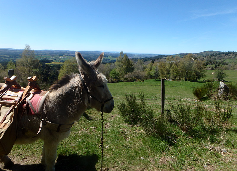 Randonnée avec les ânes en Lozère